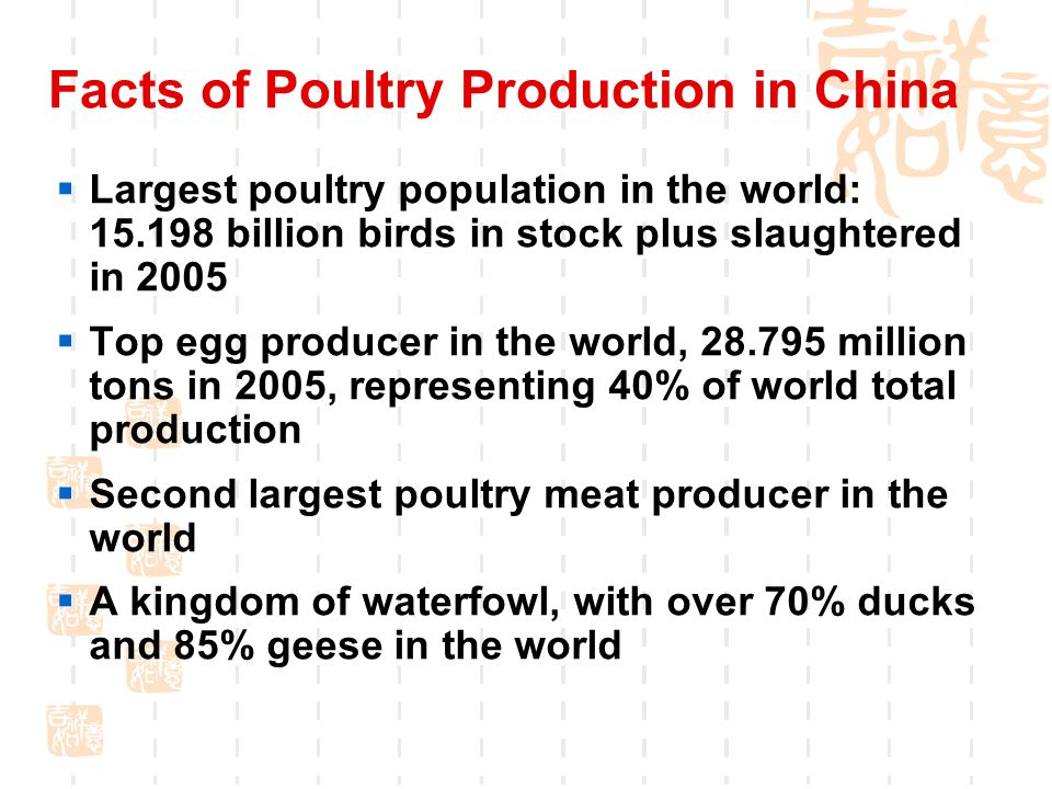 Facts of Poultry Production in China  Largest poultry population in the world: 15.198 billion birds in stock plus slaughtered in 2005  Top egg producer in the world, 28.795 million tons in 2005, representing 40% of world total production  Second largest poultry meat producer in the world  A kingdom of waterfowl, with over 70% ducks and 85% geese in the world