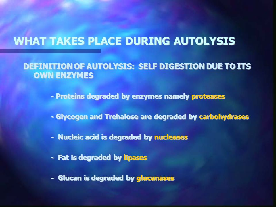 WHAT TAKES PLACE DURING AUTOLYSIS DEFINITION OF AUTOLYSIS: SELF DIGESTION DUE TO ITS OWN ENZYMES - Proteins degraded by enzymes namely proteases - Gly