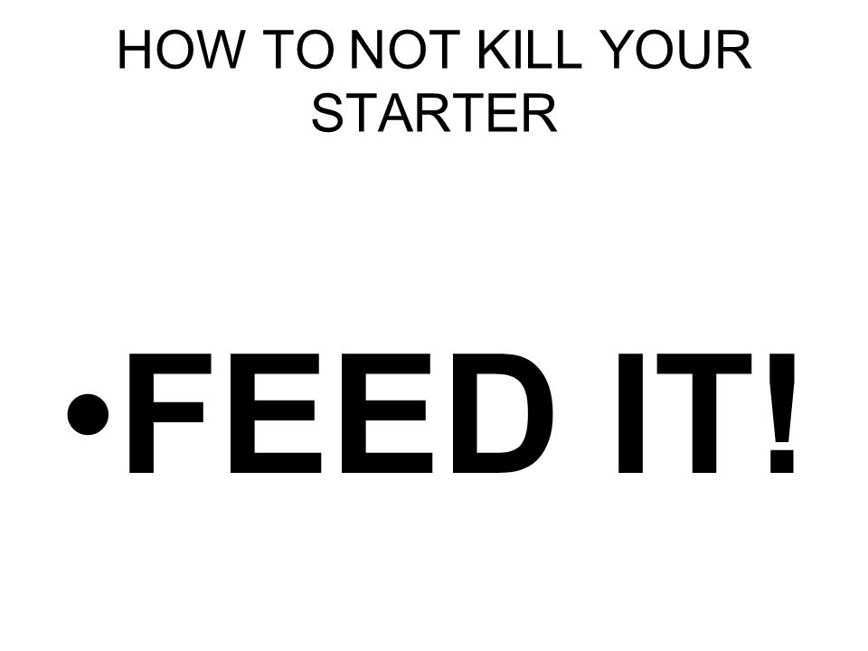 HOW TO NOT KILL YOUR STARTER FEED IT!