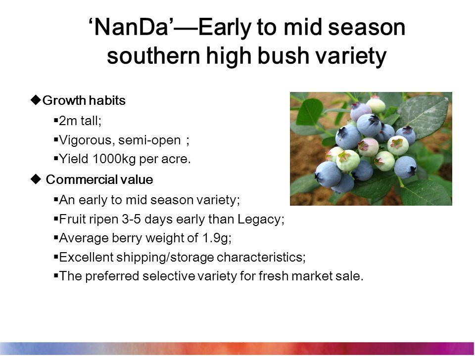 'NanDa'—Early to mid season southern high bush variety  Growth habits  2m tall;  Vigorous, semi-open ;  Yield 1000kg per acre.