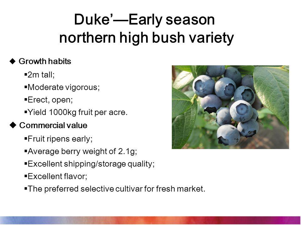 Duke'—Early season northern high bush variety  Growth habits  2m tall;  Moderate vigorous;  Erect, open;  Yield 1000kg fruit per acre.  Commerci