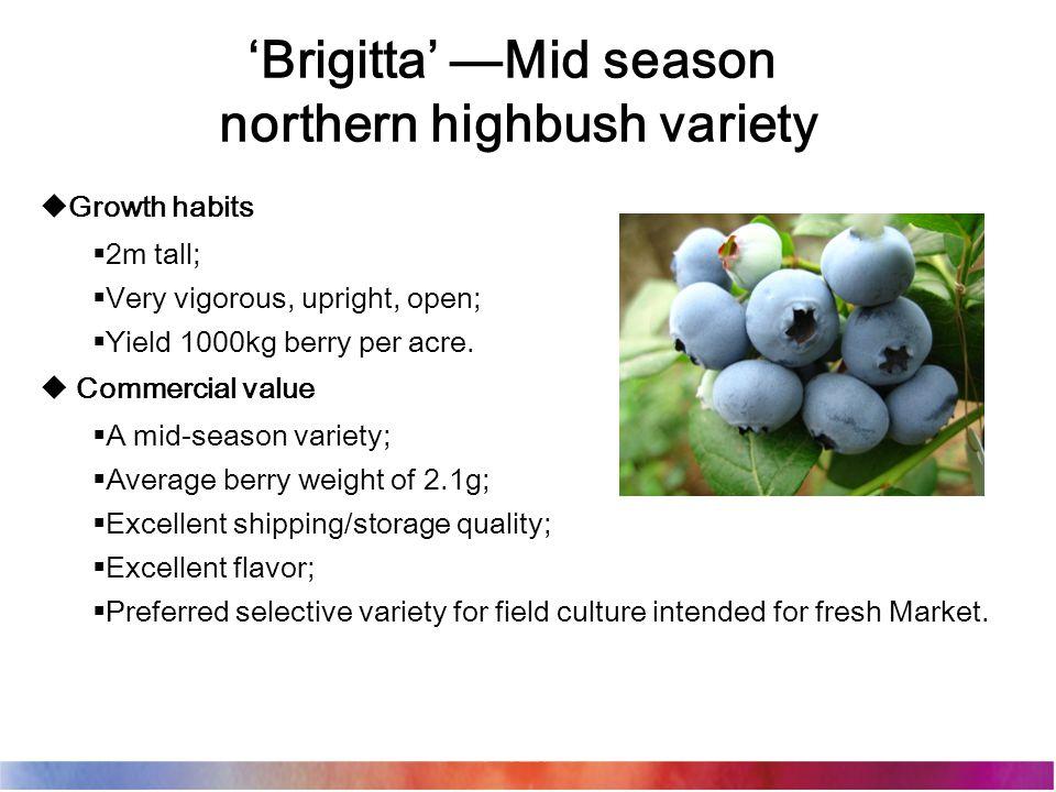 'Brigitta' —Mid season northern highbush variety  Growth habits  2m tall;  Very vigorous, upright, open;  Yield 1000kg berry per acre.