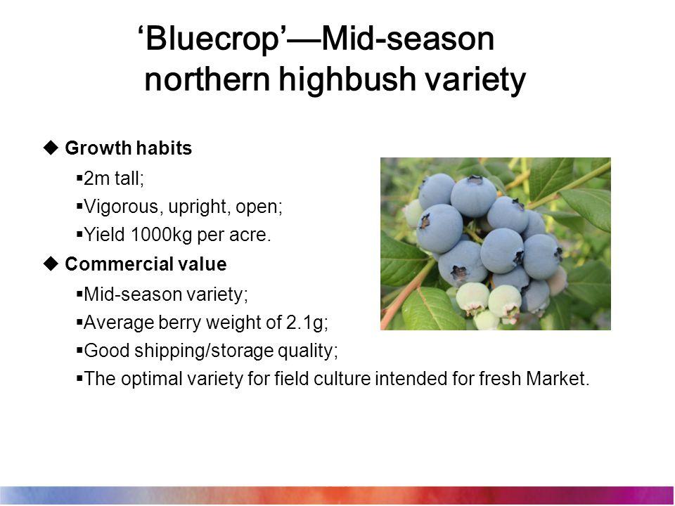 'Bluecrop'—Mid-season northern highbush variety  Growth habits  2m tall;  Vigorous, upright, open;  Yield 1000kg per acre.