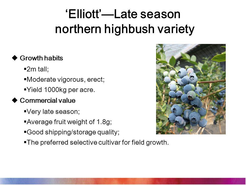 'Elliott'—Late season northern highbush variety  Growth habits  2m tall;  Moderate vigorous, erect;  Yield 1000kg per acre.
