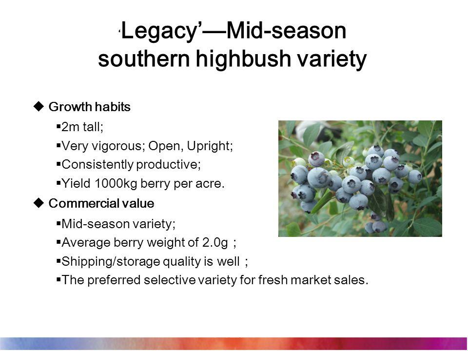 ' Legacy'—Mid-season southern highbush variety  Growth habits  2m tall;  Very vigorous; Open, Upright;  Consistently productive;  Yield 1000kg be