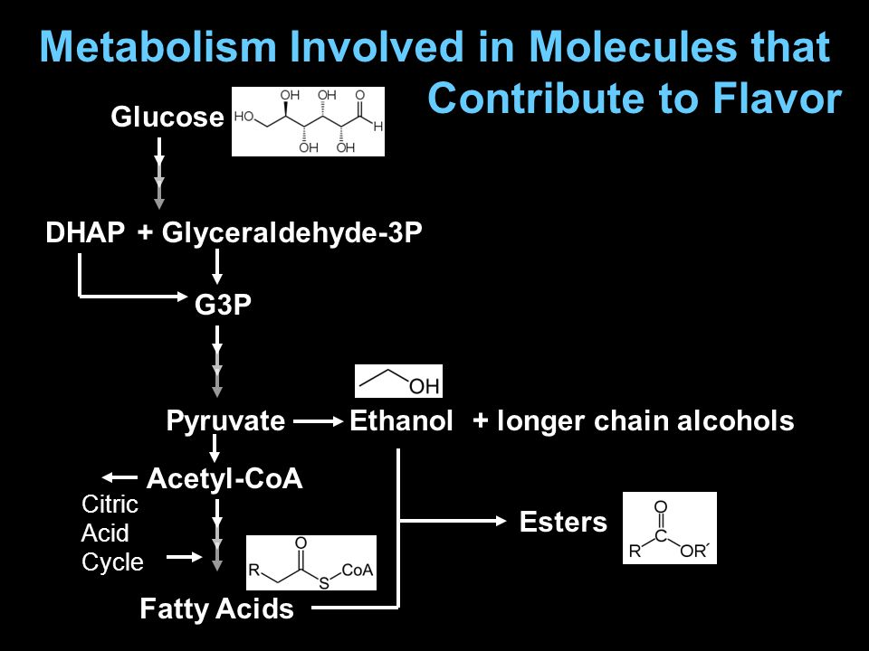 Metabolism Involved in Molecules that Contribute to Flavor Glucose PyruvateEthanol Acetyl-CoA DHAP G3P + Glyceraldehyde-3P Esters + longer chain alcohols Fatty Acids Citric Acid Cycle