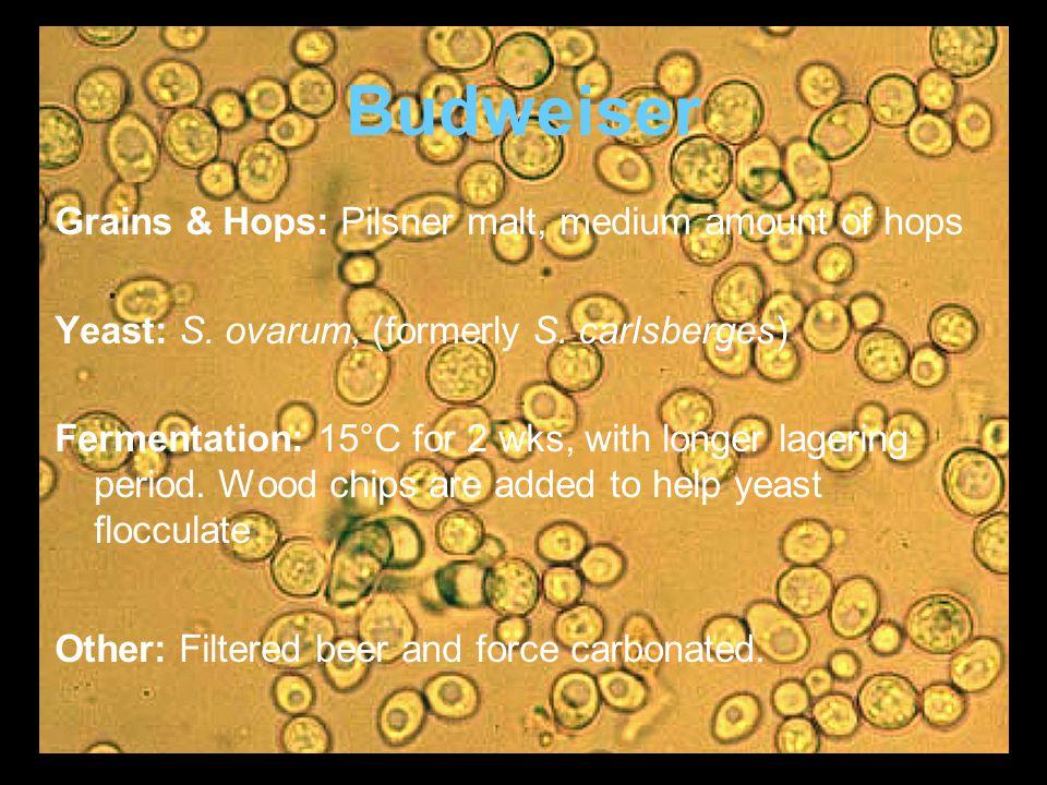 Budweiser Grains & Hops: Pilsner malt, medium amount of hops Yeast: S.
