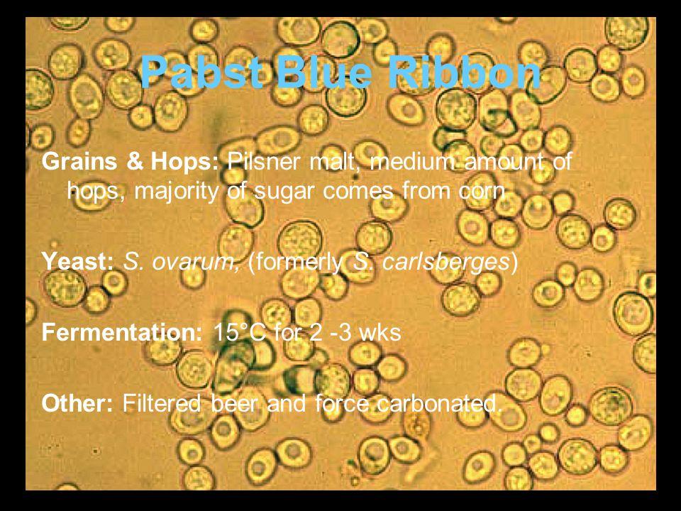 Pabst Blue Ribbon Grains & Hops: Pilsner malt, medium amount of hops, majority of sugar comes from corn Yeast: S.