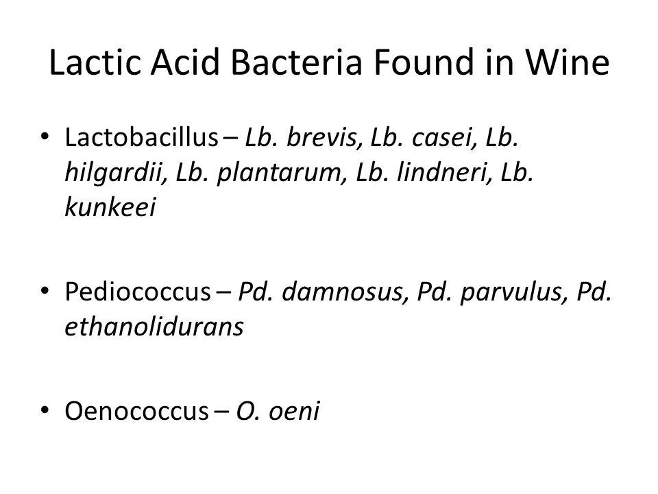 Lactic Acid Bacteria Found in Wine Lactobacillus – Lb.