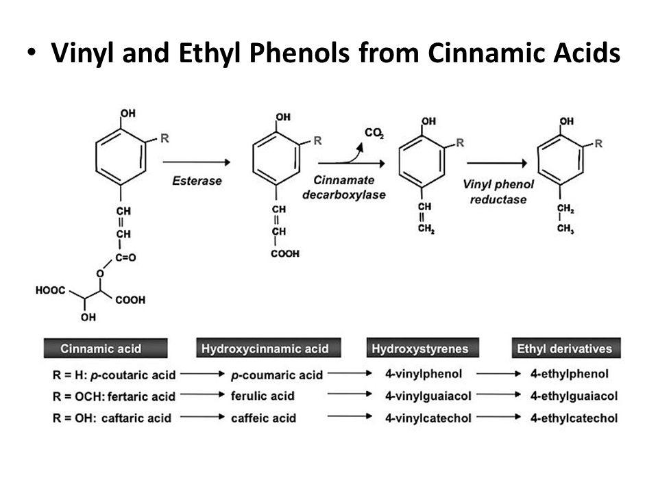 Fatty Acids From Amino Acids and Sugars