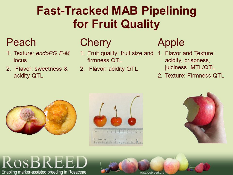Fast-Tracked MAB Pipelining Peach 1.Texture: endoPG F-M locus 2.