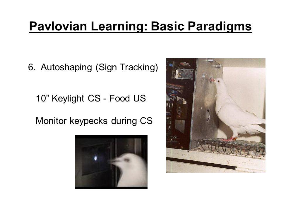 """Pavlovian Learning: Basic Paradigms 6. Autoshaping (Sign Tracking) 10"""" Keylight CS - Food US Monitor keypecks during CS"""