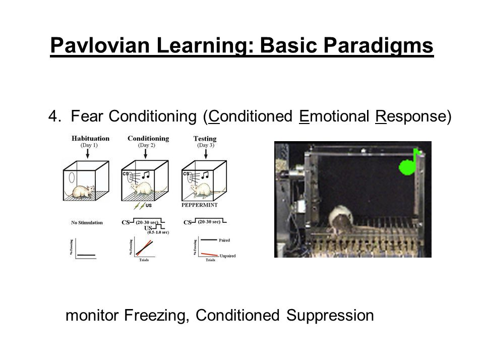 Pavlovian Learning: Basic Paradigms 4. Fear Conditioning (Conditioned Emotional Response) monitor Freezing, Conditioned Suppression