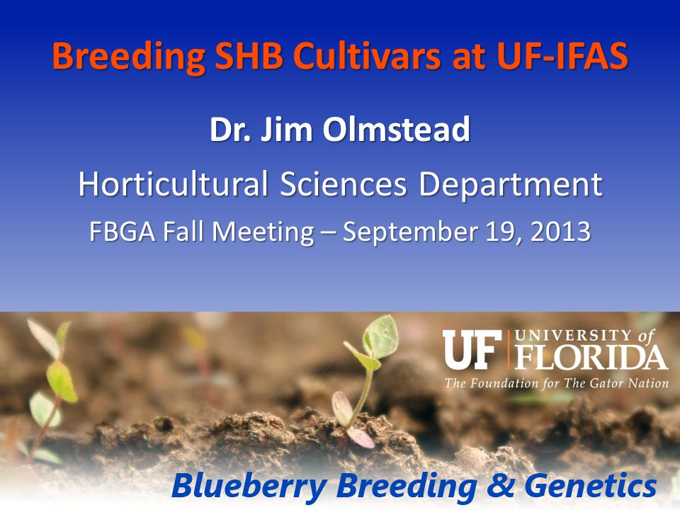 Breeding SHB Cultivars at UF-IFAS Dr.