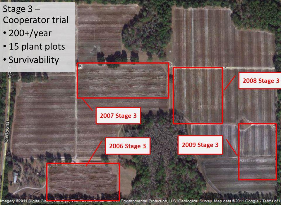 2006 Stage 3 2007 Stage 3 2008 Stage 3 2009 Stage 3 Stage 3 – Cooperator trial 200+/year 15 plant plots Survivability