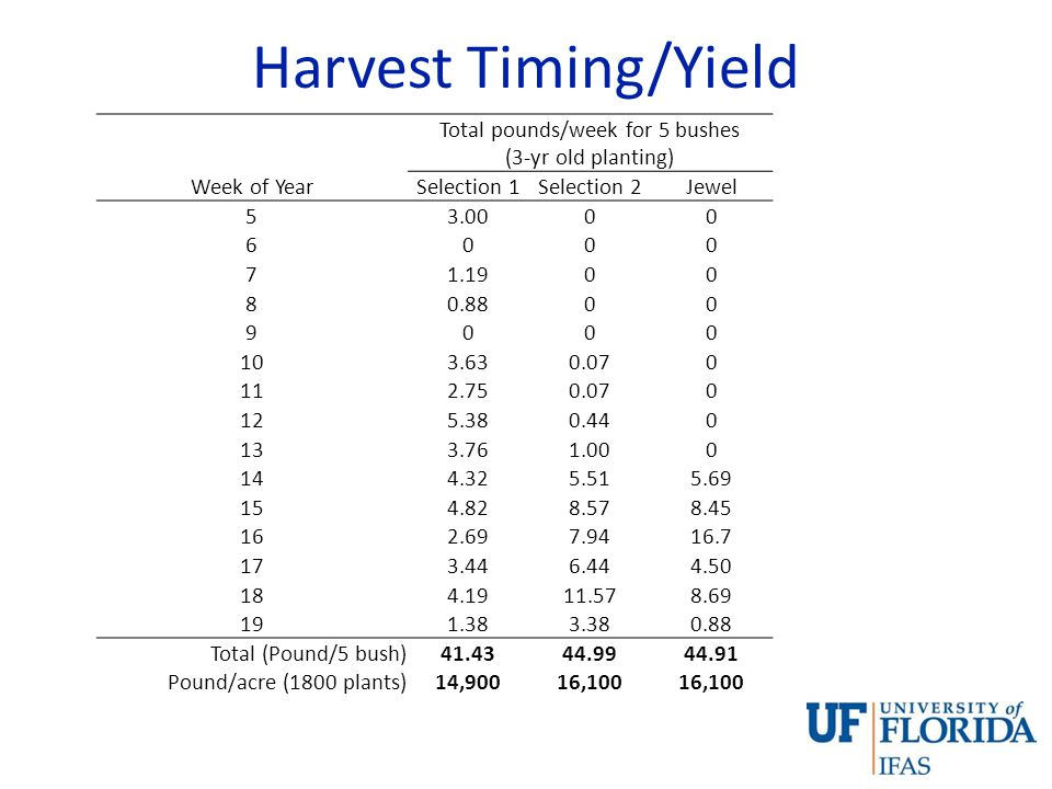 Harvest Timing/Yield Total pounds/week for 5 bushes (3-yr old planting) Week of YearSelection 1Selection 2Jewel 53.0000 6000 71.1900 80.8800 9000 103.630.070 112.750.070 125.380.440 133.761.000 144.325.515.69 154.828.578.45 162.697.9416.7 173.446.444.50 184.1911.578.69 191.383.380.88 Total (Pound/5 bush)41.4344.9944.91 Pound/acre (1800 plants)14,90016,100