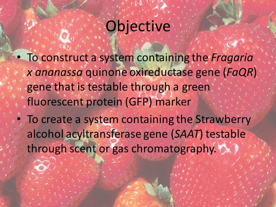 Objective To construct a system containing the Fragaria x ananassa quinone oxireductase gene (FaQR) gene that is testable through a green fluorescent protein (GFP) marker To create a system containing the Strawberry alcohol acyltransferase gene (SAAT) testable through scent or gas chromatography.