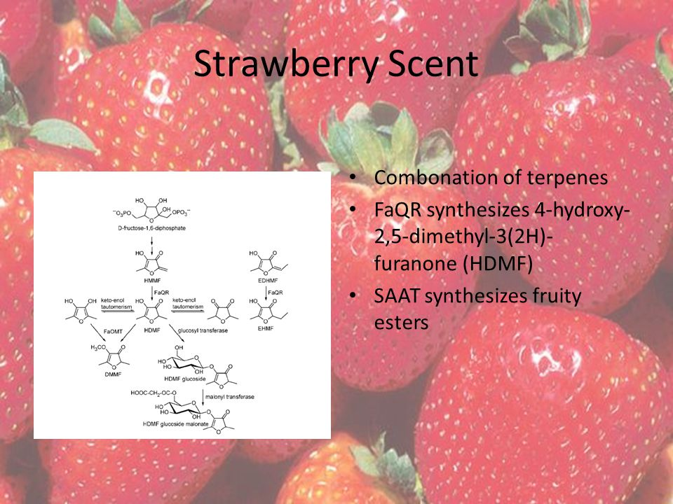 Strawberry Scent Combonation of terpenes FaQR synthesizes 4-hydroxy- 2,5-dimethyl-3(2H)- furanone (HDMF) SAAT synthesizes fruity esters