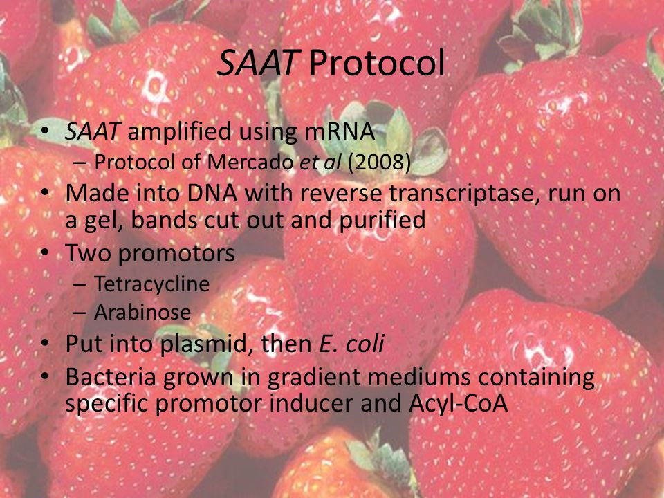 SAAT Protocol SAAT amplified using mRNA – Protocol of Mercado et al (2008) Made into DNA with reverse transcriptase, run on a gel, bands cut out and purified Two promotors – Tetracycline – Arabinose Put into plasmid, then E.