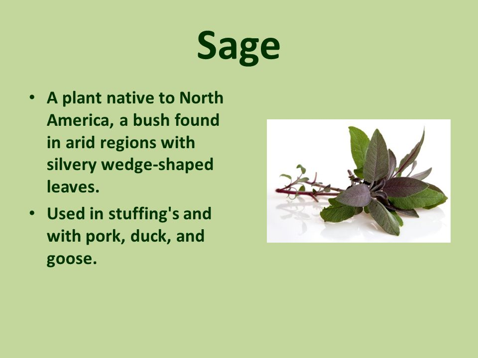 Sage A plant native to North America, a bush found in arid regions with silvery wedge-shaped leaves. Used in stuffing's and with pork, duck, and goose