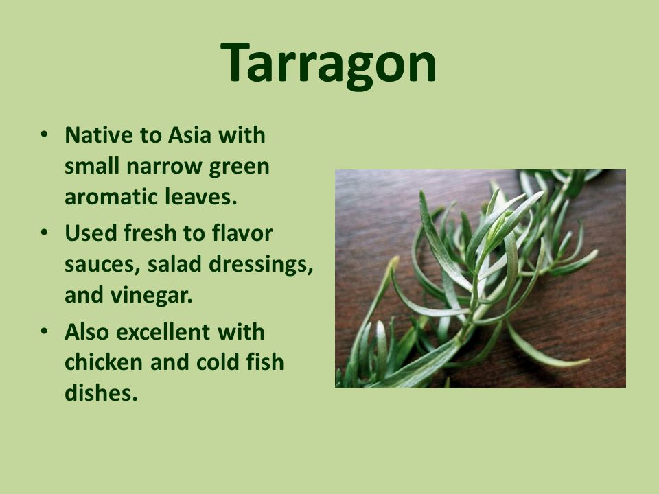 Tarragon Native to Asia with small narrow green aromatic leaves. Used fresh to flavor sauces, salad dressings, and vinegar. Also excellent with chicke