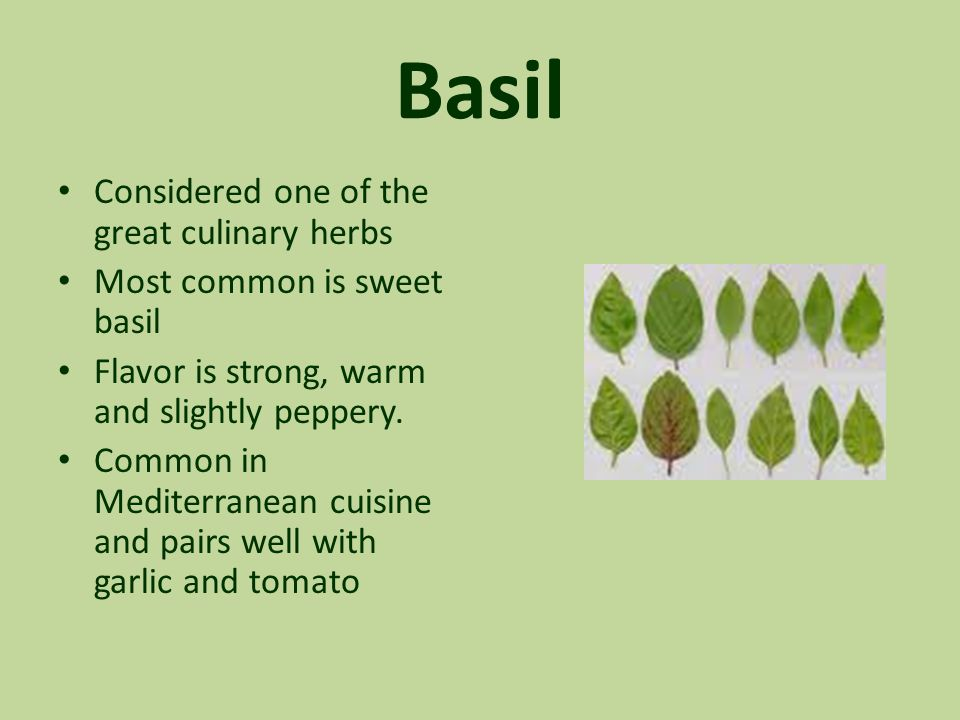 Basil Considered one of the great culinary herbs Most common is sweet basil Flavor is strong, warm and slightly peppery. Common in Mediterranean cuisi