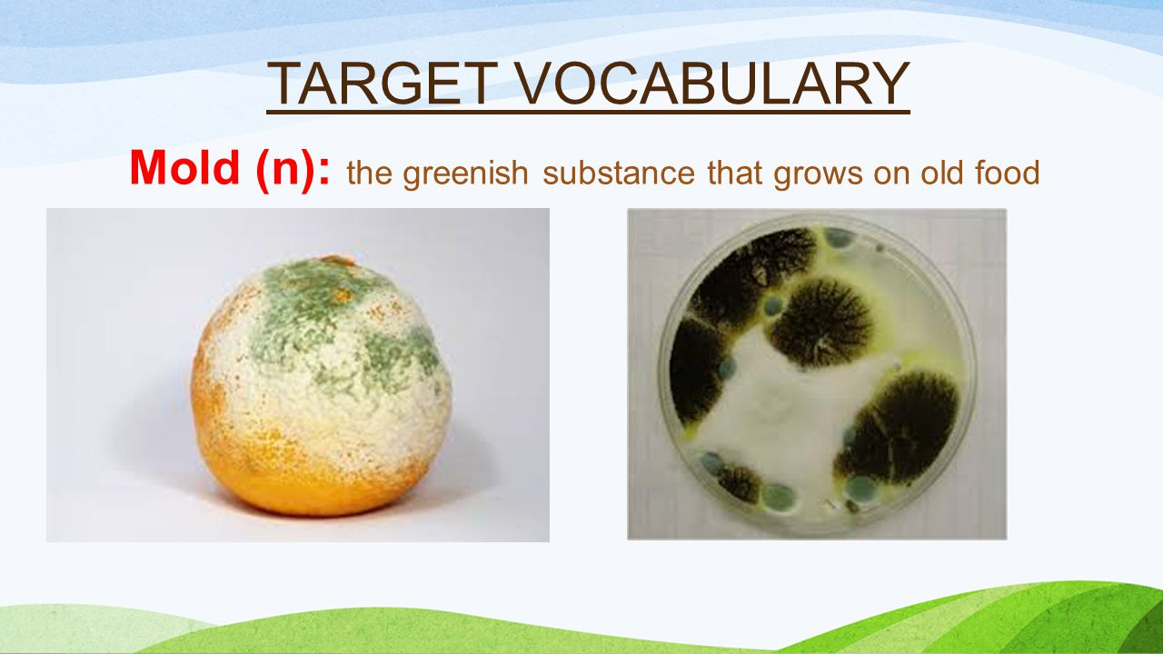 TARGET VOCABULARY Mold (n): the greenish substance that grows on old food