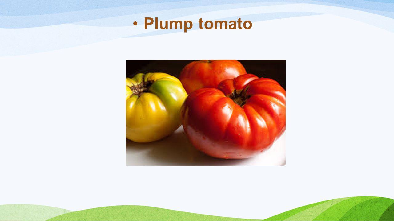 Plump tomato