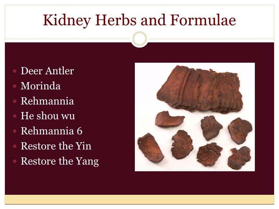Kidney Herbs and Formulae Deer Antler Morinda Rehmannia He shou wu Rehmannia 6 Restore the Yin Restore the Yang