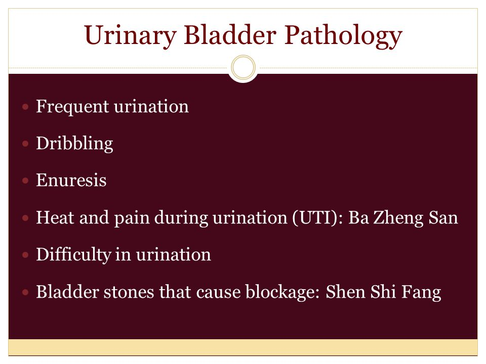 Urinary Bladder Pathology Frequent urination Dribbling Enuresis Heat and pain during urination (UTI): Ba Zheng San Difficulty in urination Bladder stones that cause blockage: Shen Shi Fang
