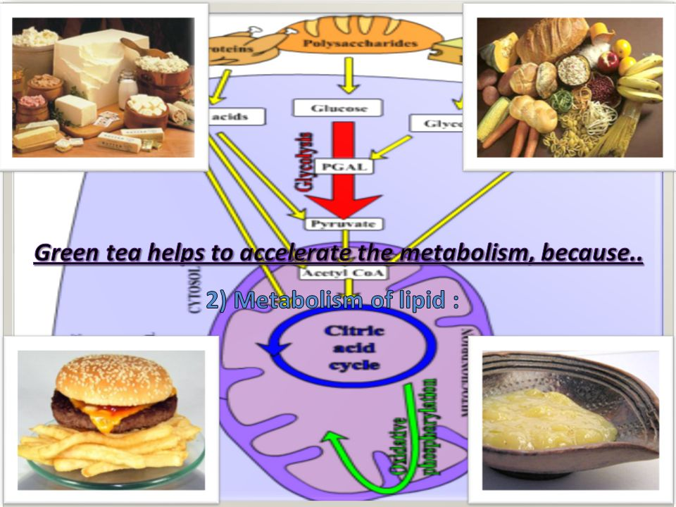 Increase in glucose metabolism in healthy humans administered with green tea Oral glucose tolerance curves (OGTT, n = 22) and basal blood glucose levels (Basal, n = 25) Figure