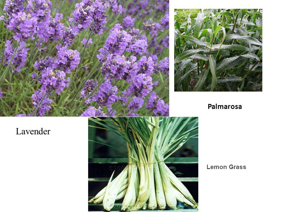 Lavender Palmarosa Lemon Grass
