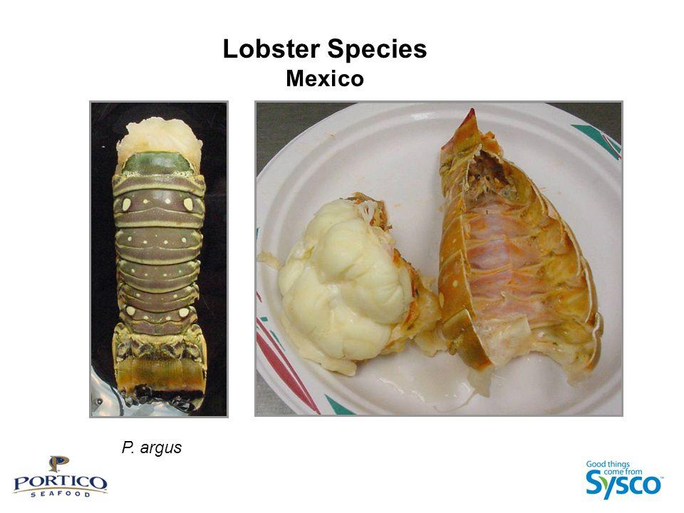 Lobster Species Mexico P. argus