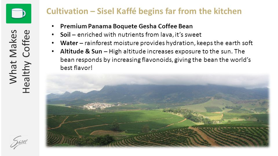 1 What Makes Healthy Coffee Cultivation – Sisel Kaffé begins far from the kitchen Premium Panama Boquete Gesha Coffee Bean Soil – enriched with nutrie