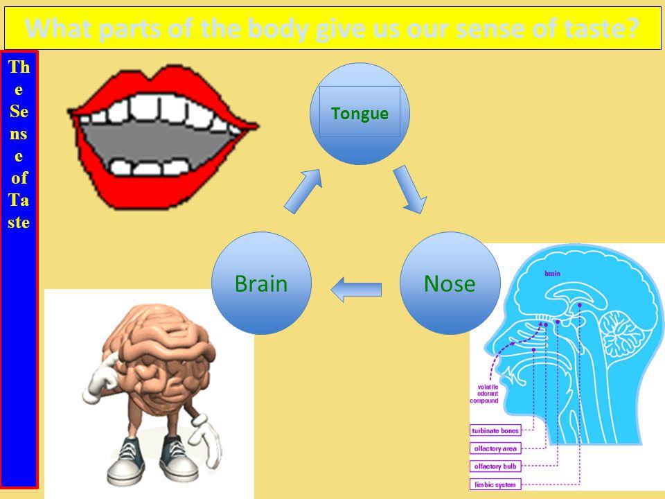 Th e Se ns e of Ta ste What parts of the body give us our sense of taste Tongue BrainNose