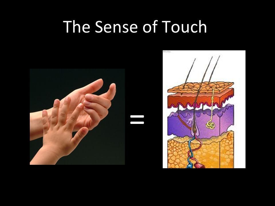 The skin allows us to have the sense of touch =