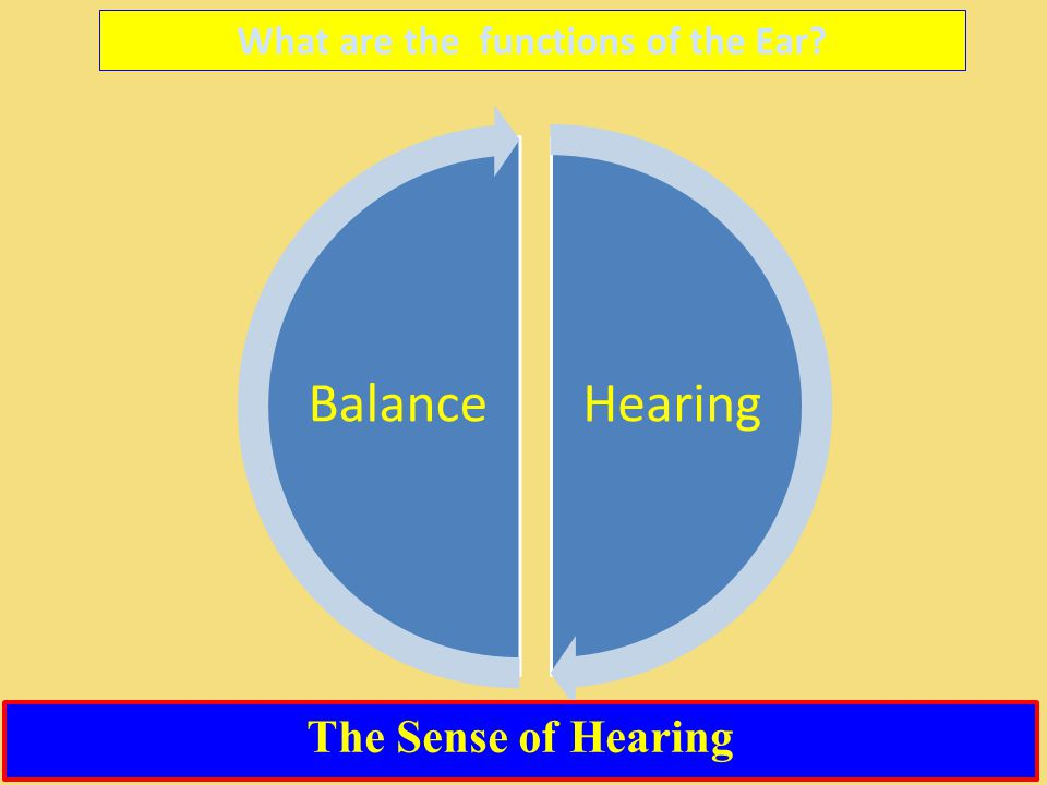 What are the functions of the Ear? HearingBalance The Sense of Hearing