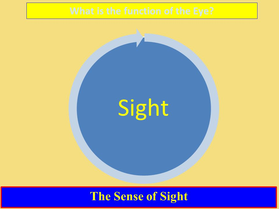 What is the function of the Eye? Sight The Sense of Sight