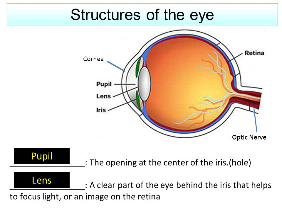 Structures of the eye Pupil Lens ________________: The opening at the center of the iris.(hole) ________________: A clear part of the eye behind the i