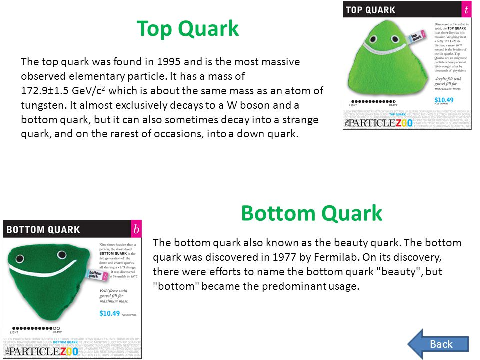 The top quark was found in 1995 and is the most massive observed elementary particle. It has a mass of 172.9±1.5 GeV/c 2 which is about the same mass
