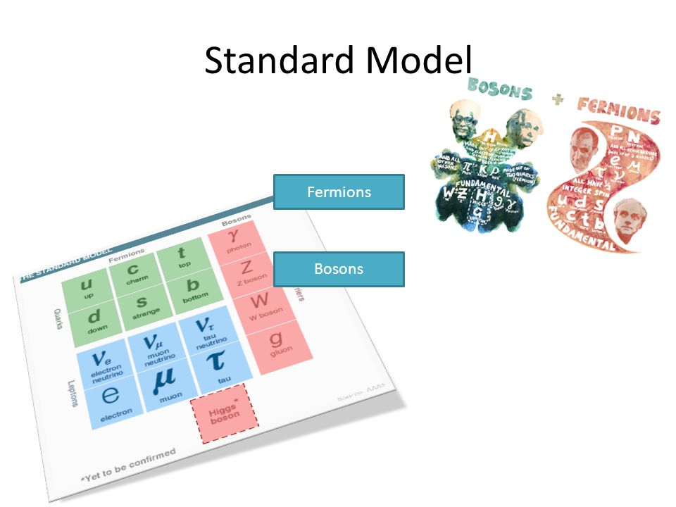 Standard Model Bosons Fermions