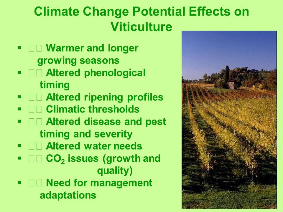 Climate Change Potential Effects on Viticulture  Warmer and longer growing seasons  Altered phenological timing  Altered ripening profiles  Climatic thresholds  Altered disease and pest timing and severity  Altered water needs  CO 2 issues (growth and quality)  Need for management adaptations