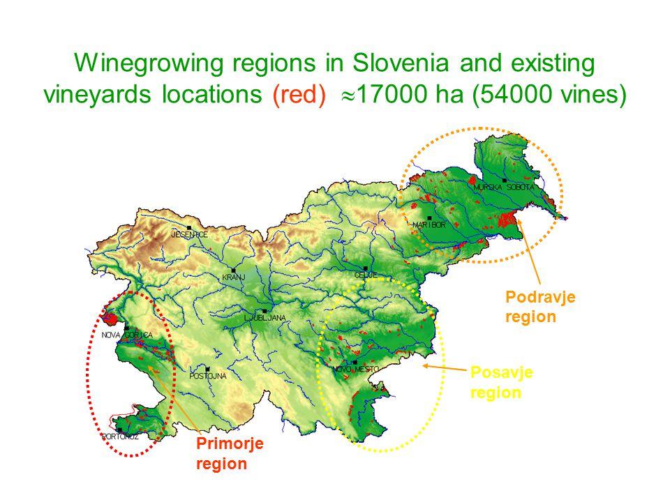 Winegrowing regions in Slovenia and existing vineyards locations (red)  17000 ha (54000 vines) Primorje region Posavje region Podravje region