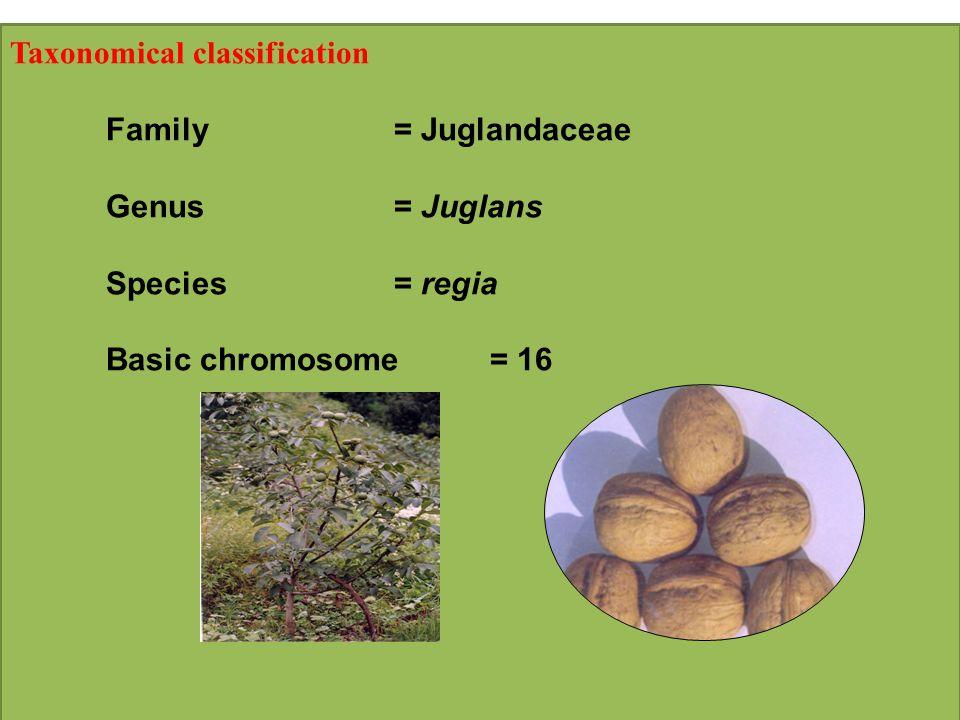 Taxonomical classification Family= Juglandaceae Genus= Juglans Species= regia Basic chromosome= 16