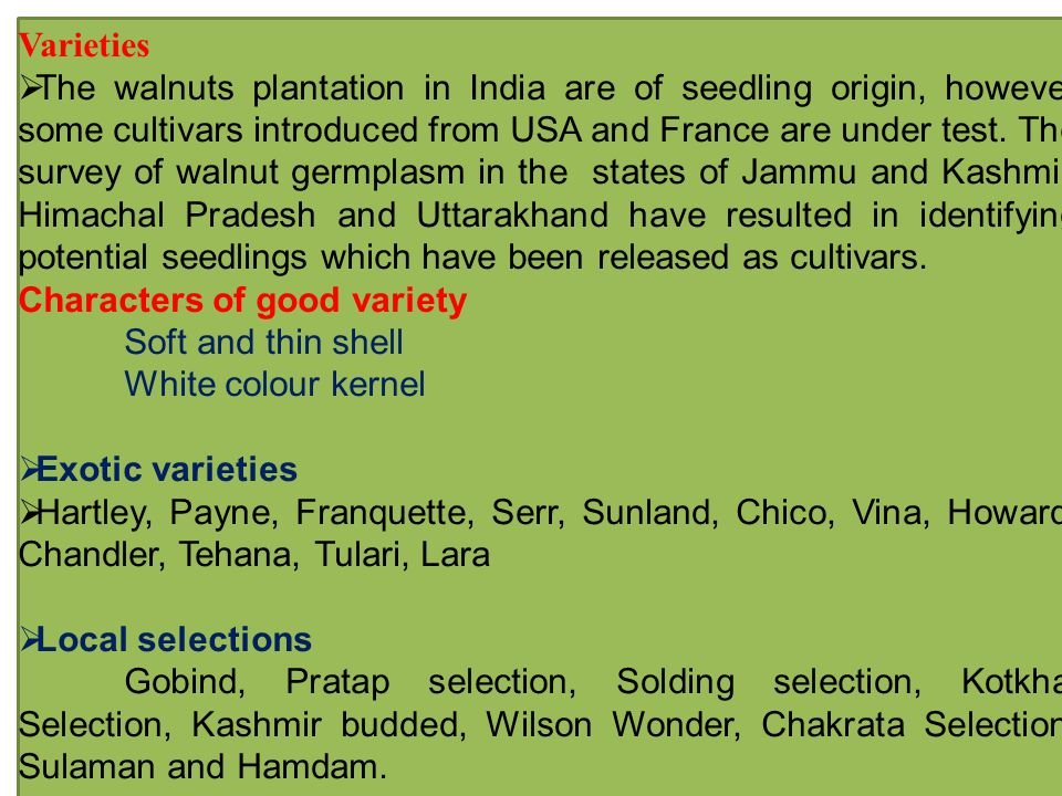 Varieties  The walnuts plantation in India are of seedling origin, however some cultivars introduced from USA and France are under test.