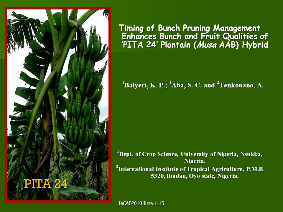 IeCAB2010 June 1-15 Timing of Bunch Pruning Management Enhances Bunch and Fruit Qualities of 'PITA 24' Plantain (Musa AAB) Hybrid 1 Baiyeri, K. P.; 1