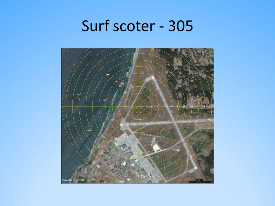 Surf scoter - 305