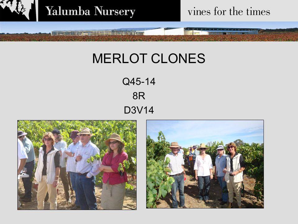 MERLOT CLONES Q45-14 8R D3V14