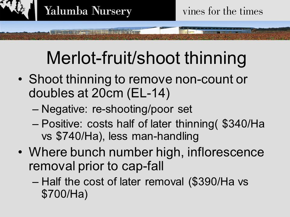 Merlot-fruit/shoot thinning Shoot thinning to remove non-count or doubles at 20cm (EL-14) –Negative: re-shooting/poor set –Positive: costs half of later thinning( $340/Ha vs $740/Ha), less man-handling Where bunch number high, inflorescence removal prior to cap-fall –Half the cost of later removal ($390/Ha vs $700/Ha)