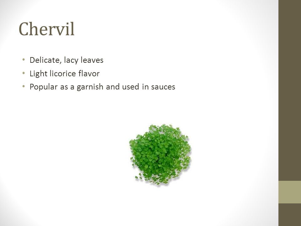 Chervil Delicate, lacy leaves Light licorice flavor Popular as a garnish and used in sauces